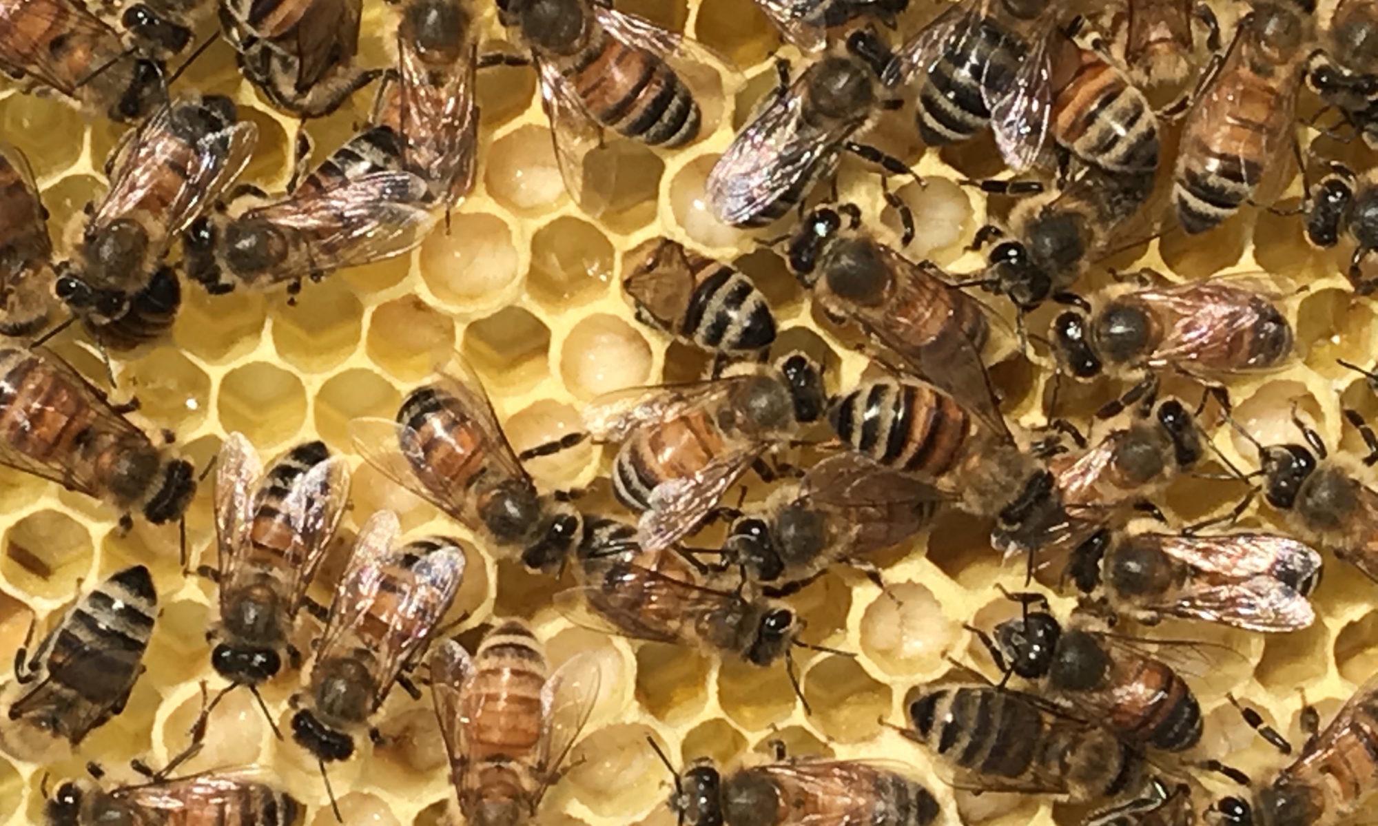 Baltimore Beekeepers